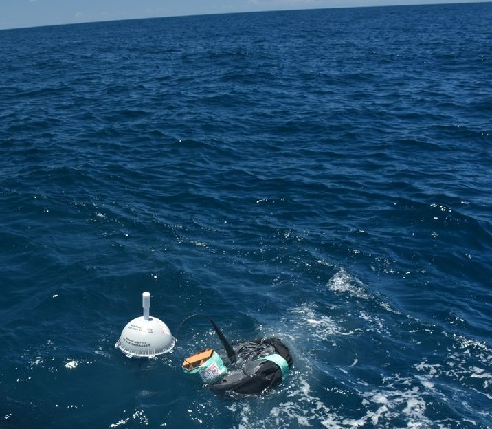 TRUSTED buoys in sea
