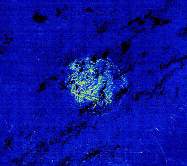 shoal of sargassum